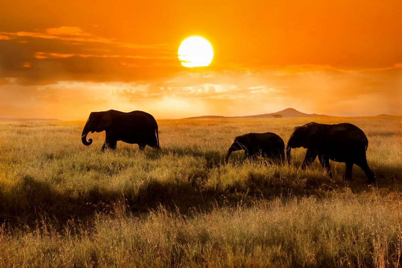 kenia rezerwat masai mara