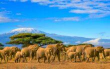 Zdobądź Dach Afryki