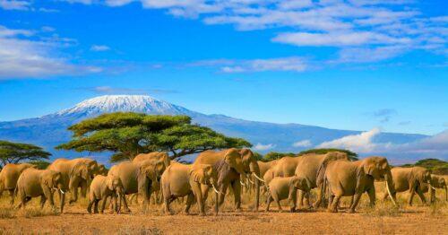 Przygoda w dzikiej Afryce 3