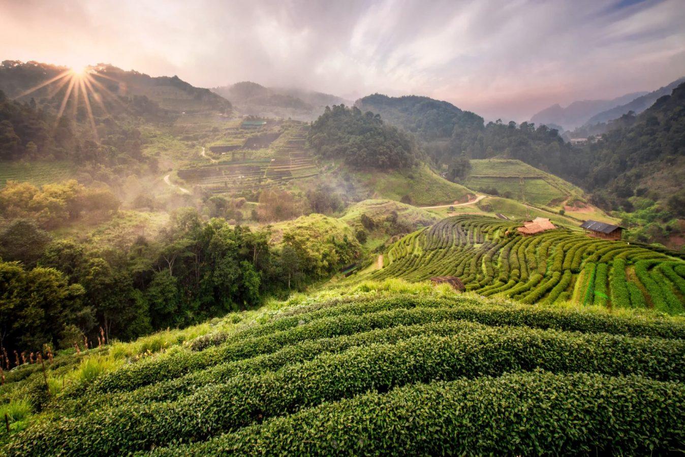 Wietnam farma