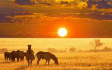 Oblicze Prawdziwej Afryki