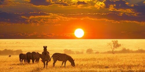 Oblicze Prawdziwej Afryki. 8