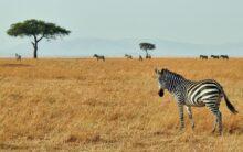 Kraina Masajów
