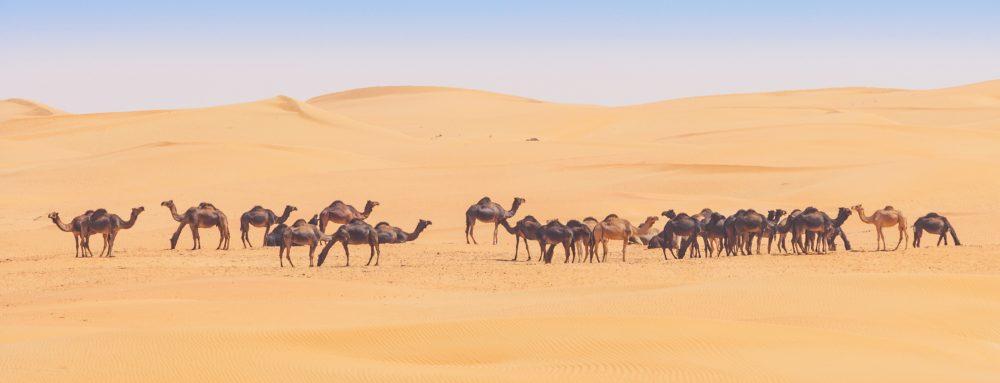 Oman - nieodkryty ląd 13