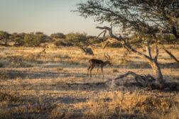 Namibia okiem fotografa