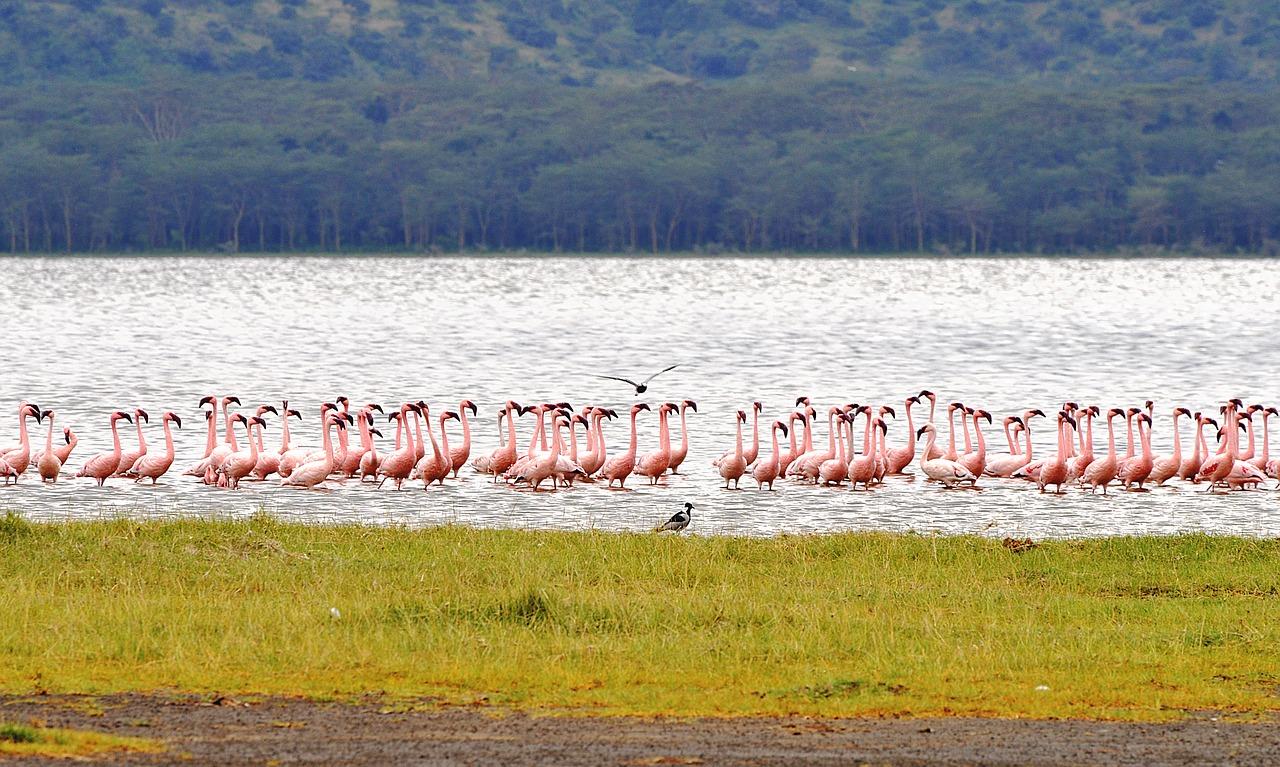 Parki narodowe w Kenii – epicka podróż do kolebki życia