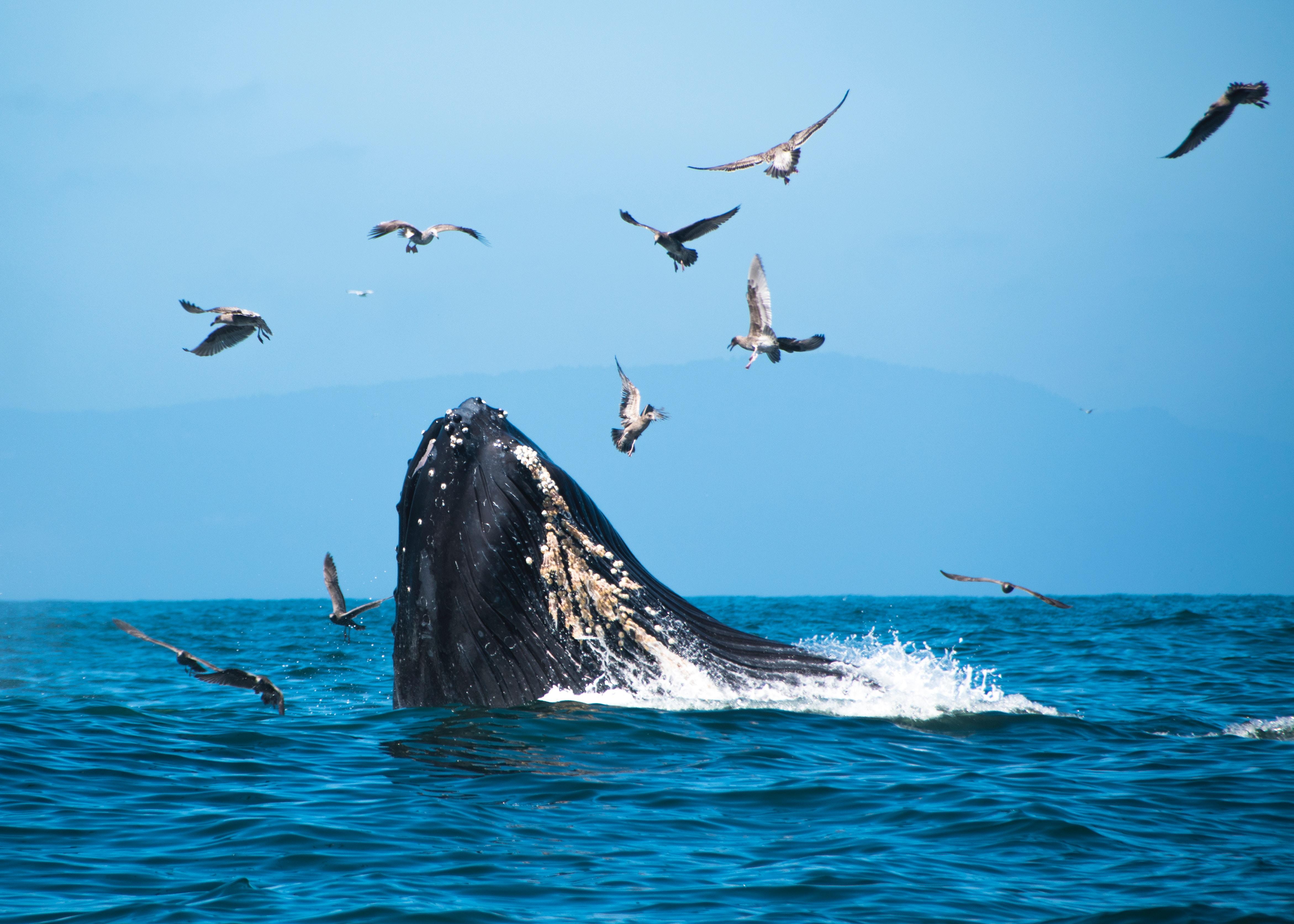 Rejs w poszukiwaniu wielorybów ||Reykjavik 1