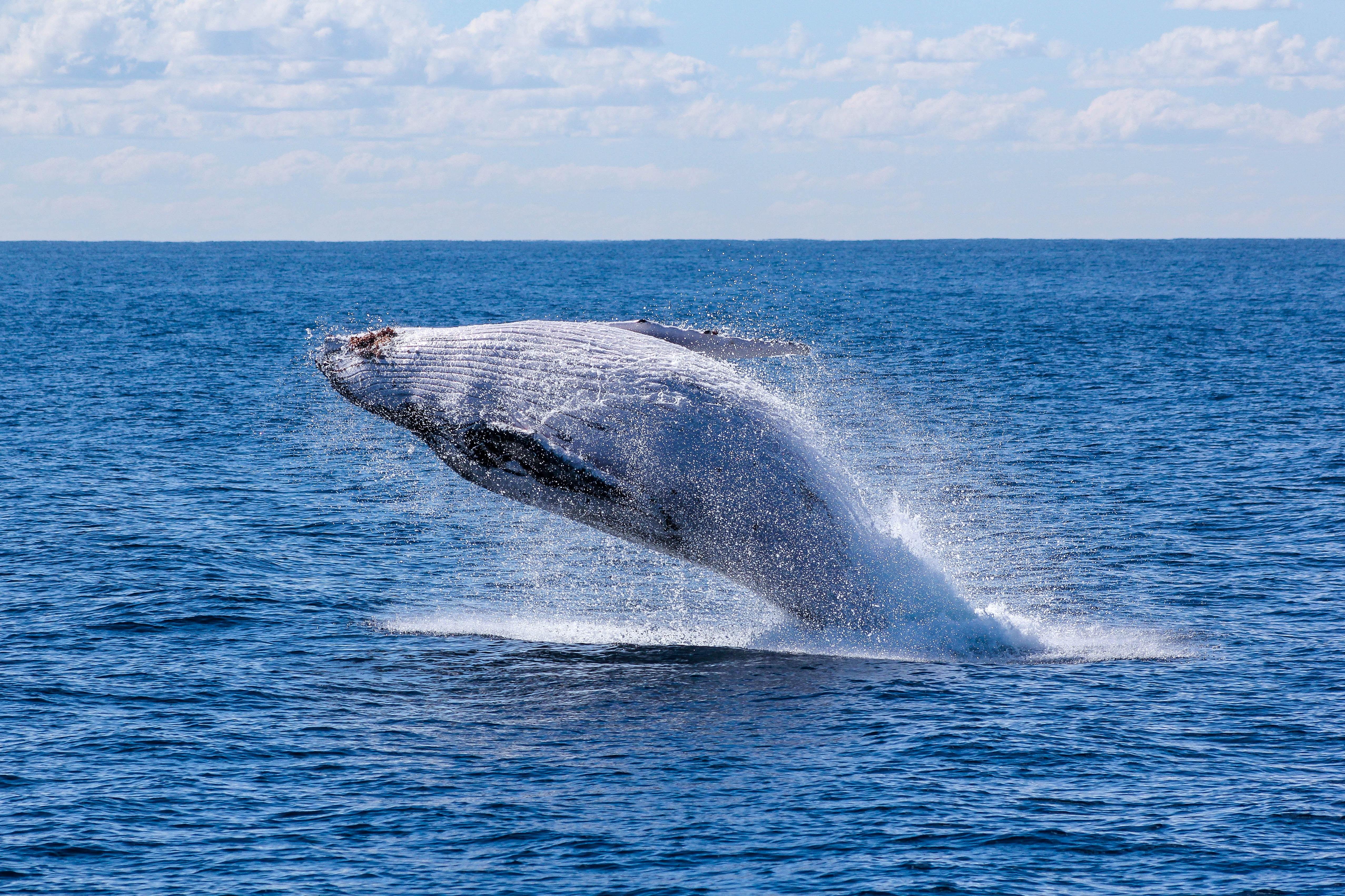 Rejs w poszukiwaniu wielorybów