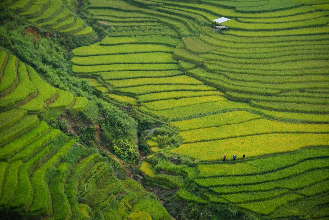 Wietnam - klimat i pogoda