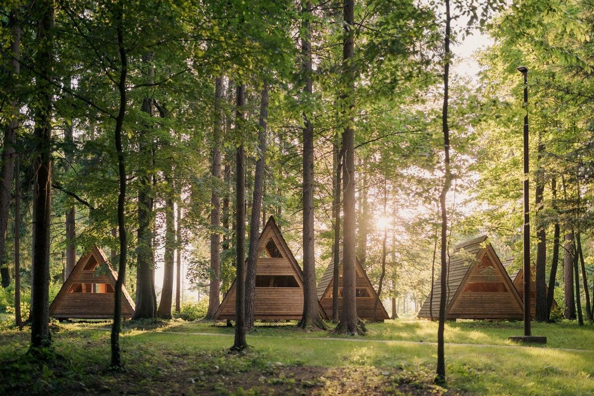 Live Wild Summer Camp 54