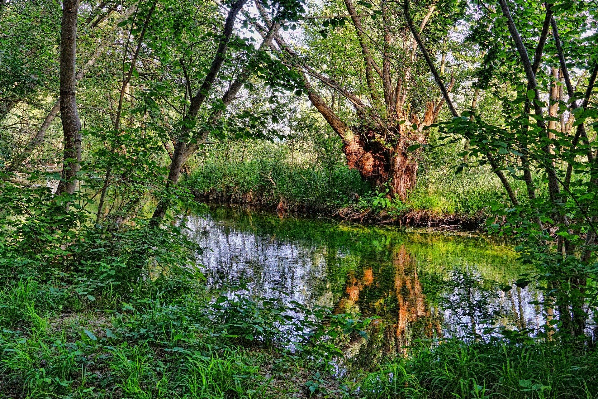 Spływ rzeką Wieprz 11