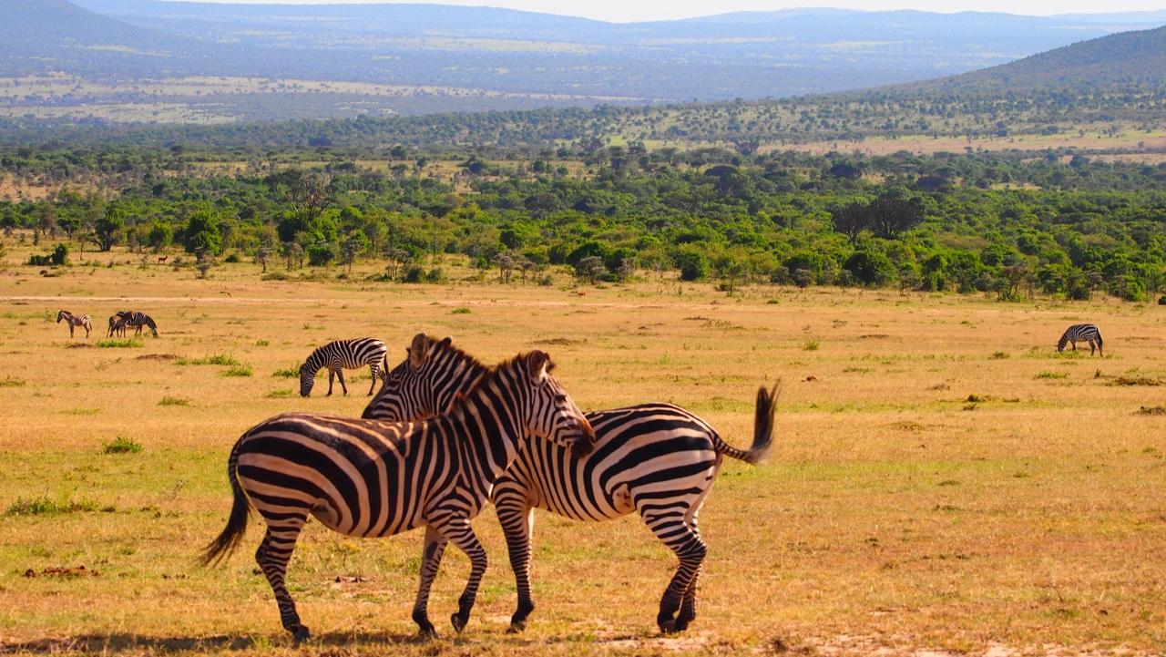 Kenia – kraina Masajów i dzikiego safari