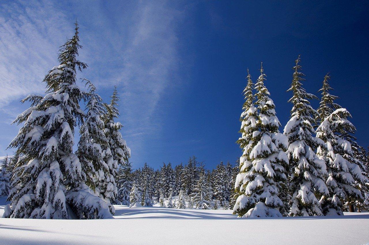 Zimowe sporty zima choinki