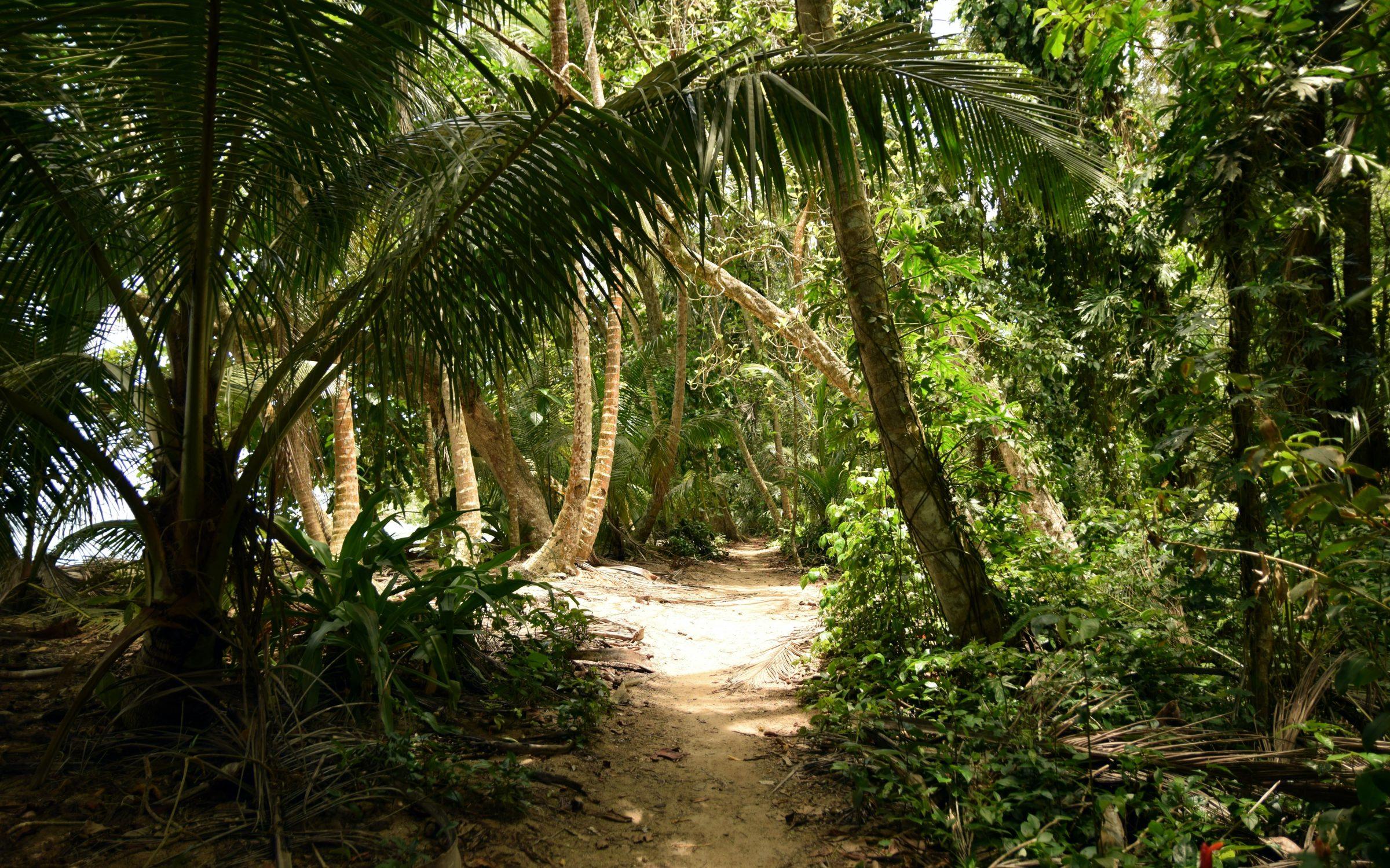 Zielona i dzika oaza 2