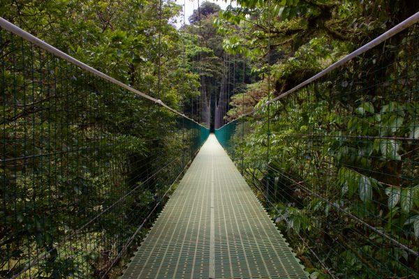 Zielona i dzika oaza 3