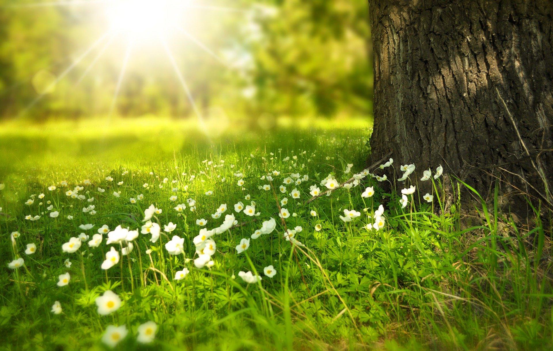 Drzewo i kwiaty