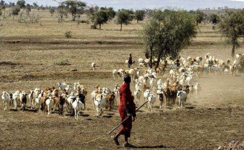 pustynia w Tanzanii